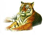 Les affinités amoureuses du Tigre