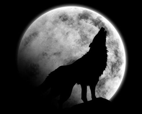 Le loup comme les mages et les sorcières s'en remet à la Lune