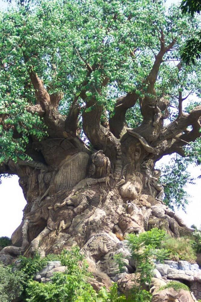 Avec l'animisme, même les arbres possèdent un esprit