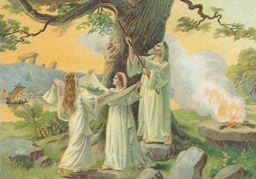 Samain était la fête de la cueillette du gui par les druides
