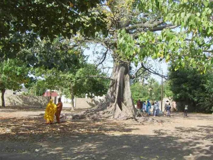 Loko est le dieu des arbres remarquables